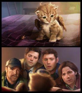 Ai cũng không địch lại chú mèo =)))))